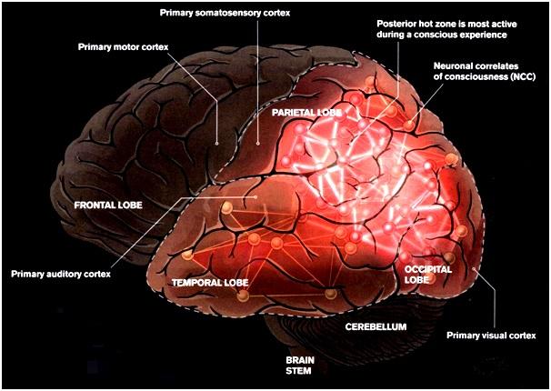 Brain Consciousness Centre