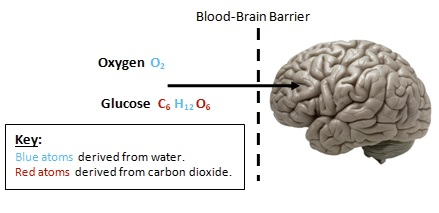 Glucose Atom Origins