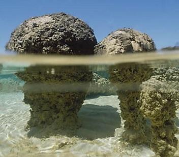Living Stromatolites