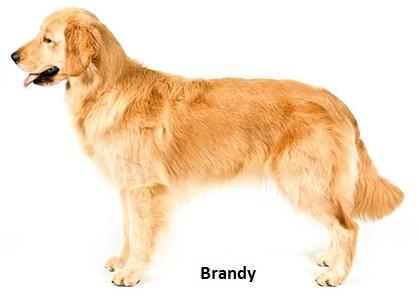 New Brandy Photograph