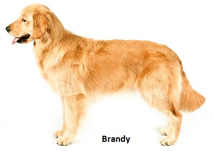 New Brandy Photograph