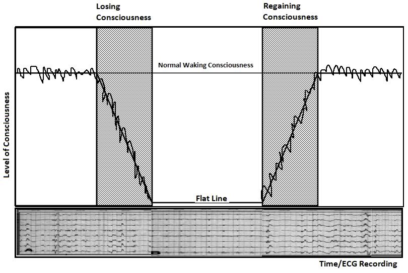 Consciousness Final Graph